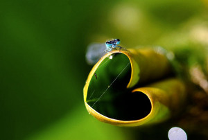 beautiful-heart-hearts-love-nature-Favim.com-330544