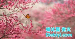 BeautifulNature3-610x320_diebiyi